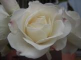Flowers 064