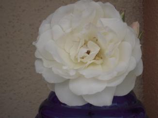 Flowers 076